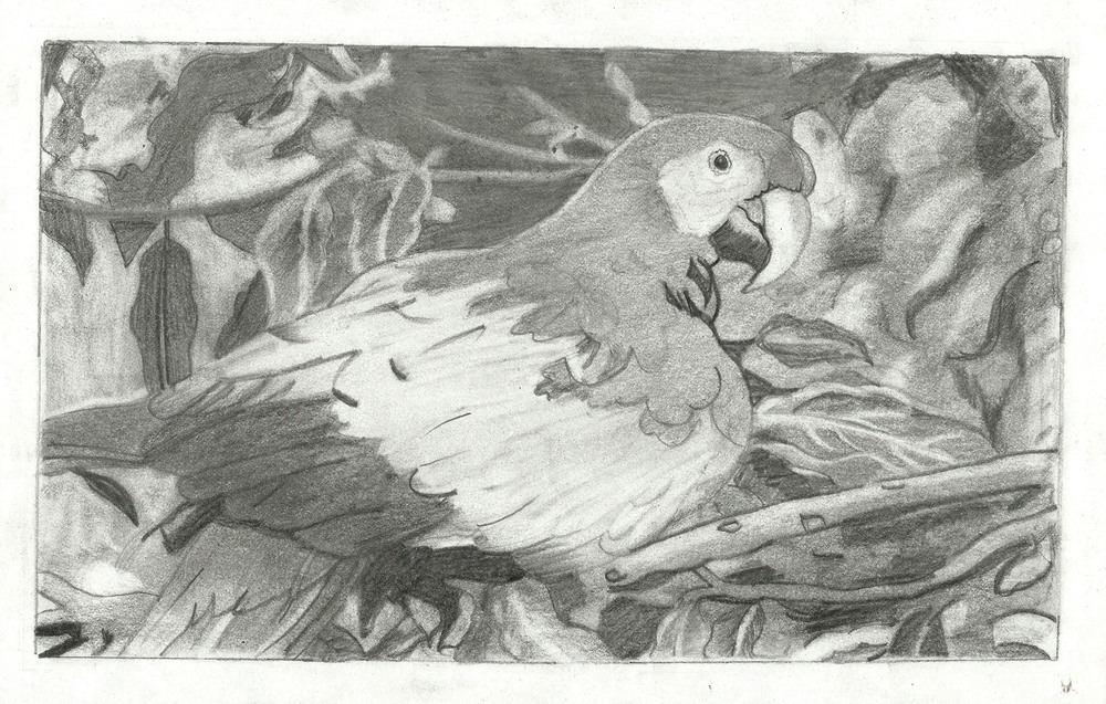 Lipima Pradhan Age 13 Parrot.jpeg