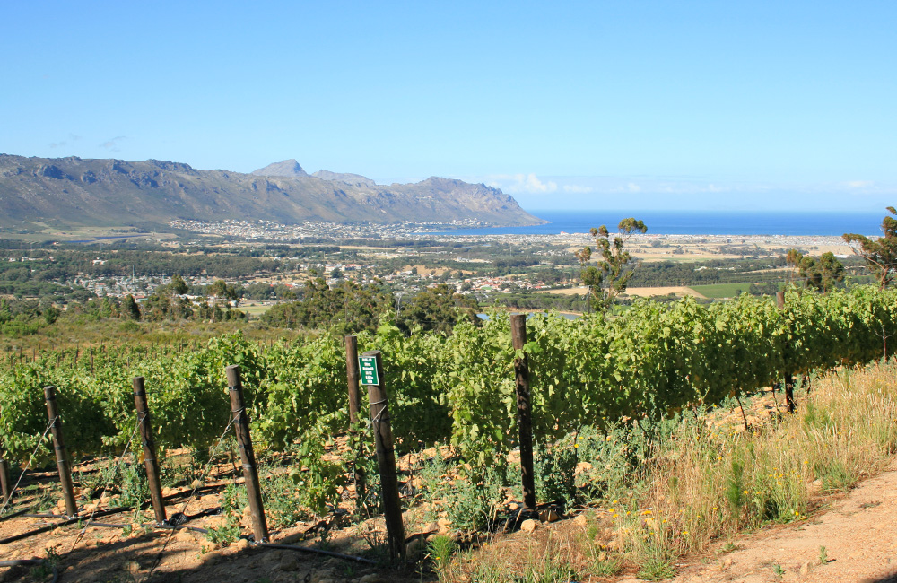 Lower block - Shiraz. Facing False Bay