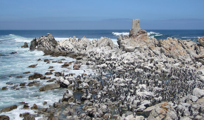 Lalapanzi-Lodge-Penguins.jpg