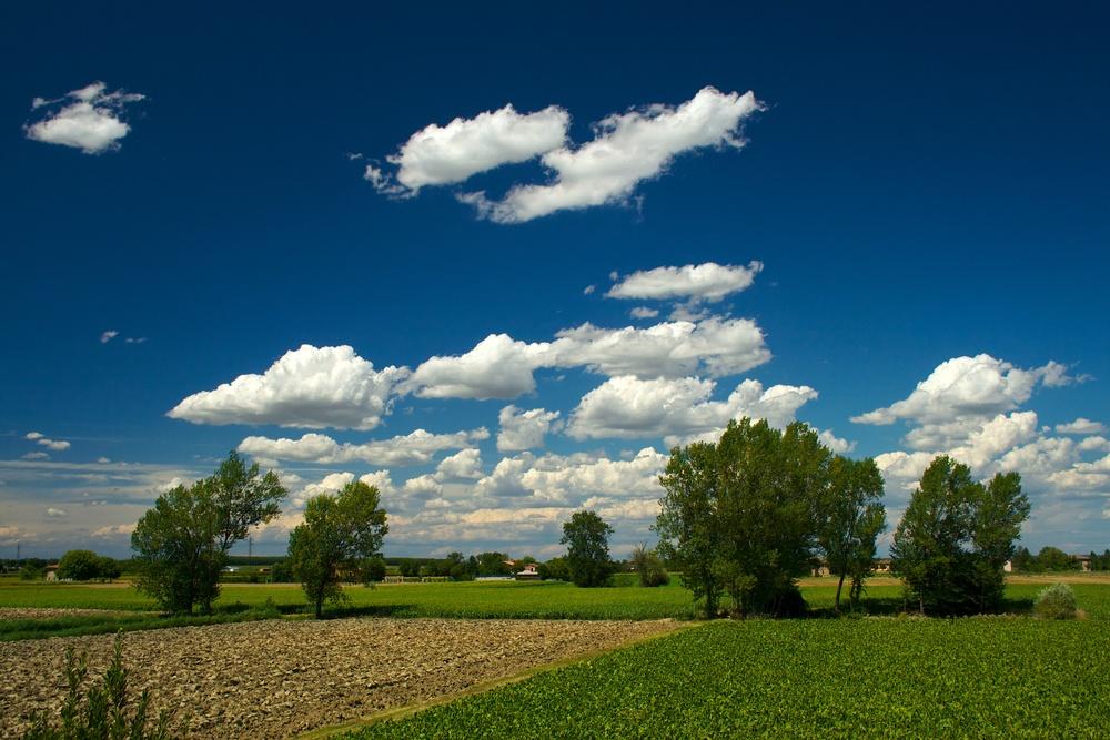 Bassa landscape.jpg