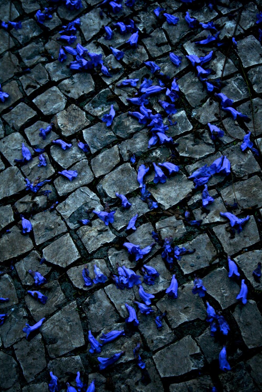 Violet leaves.jpg