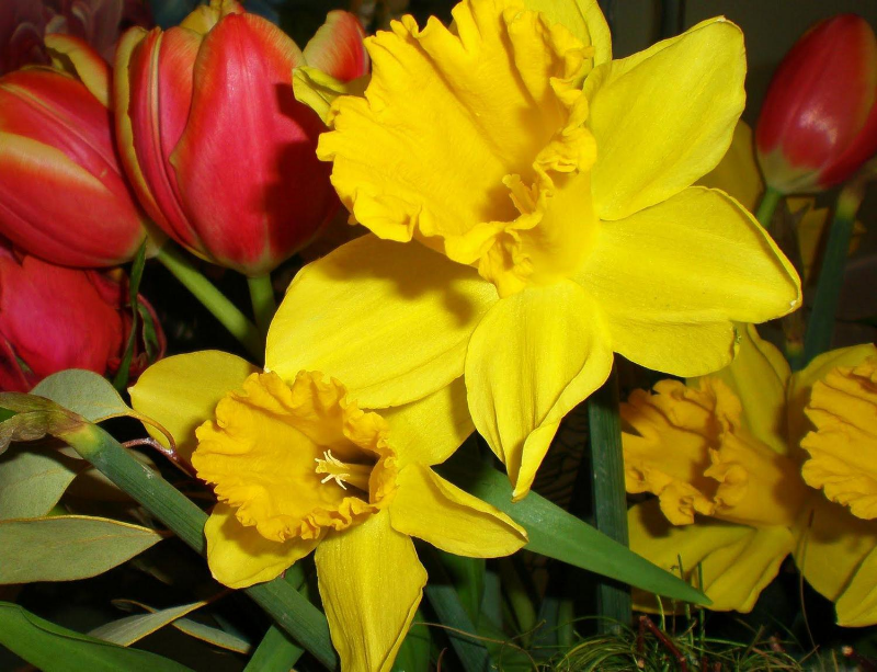 Easter flowers are here at the market country barn easter flowers are here at the market mightylinksfo