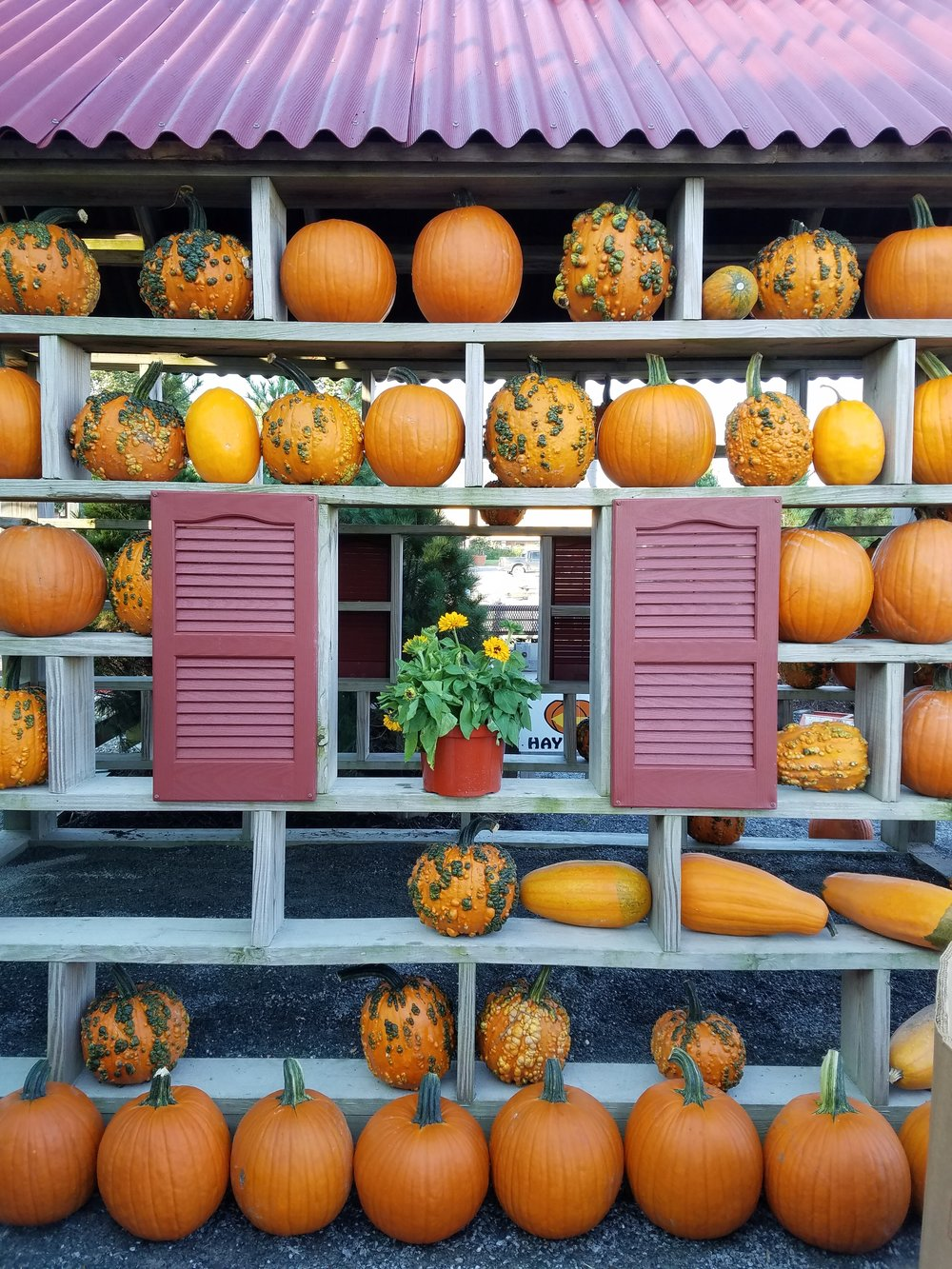 pumpkin house.jpg