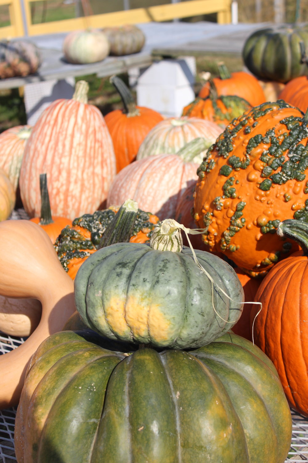 market pumpkins decor.JPG