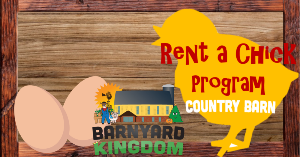 rent a chick website banner.png