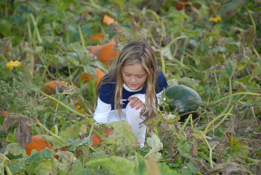 Down and dirty in the pumpkin patch.JPG
