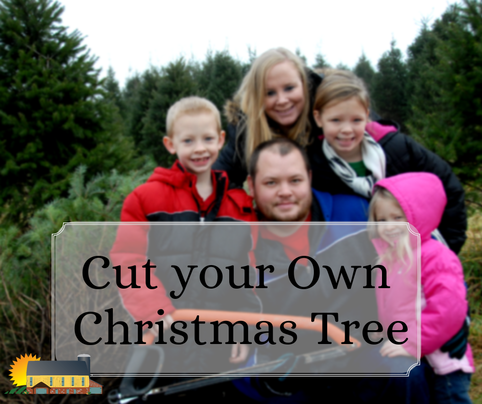 Cut your own Christmas Tree at Country Barn!