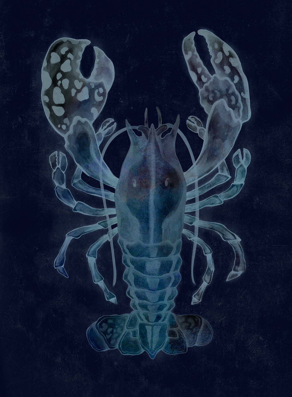 Lobster_1_invert.jpg