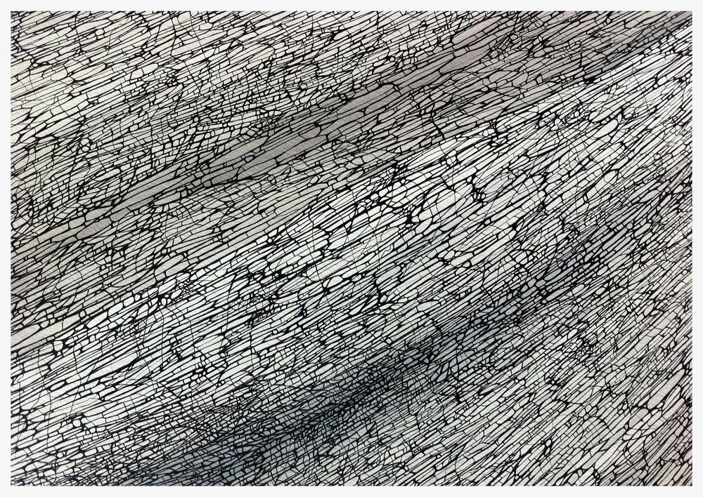 Divergence - Study 2 © ANTHONY WIGGLESWORTH 2015 Ink on Paper - 56 cm x 76 cm anthonysart.com