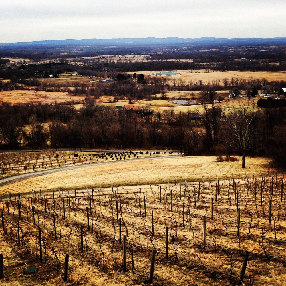 The March view at Bluemont Vineyard