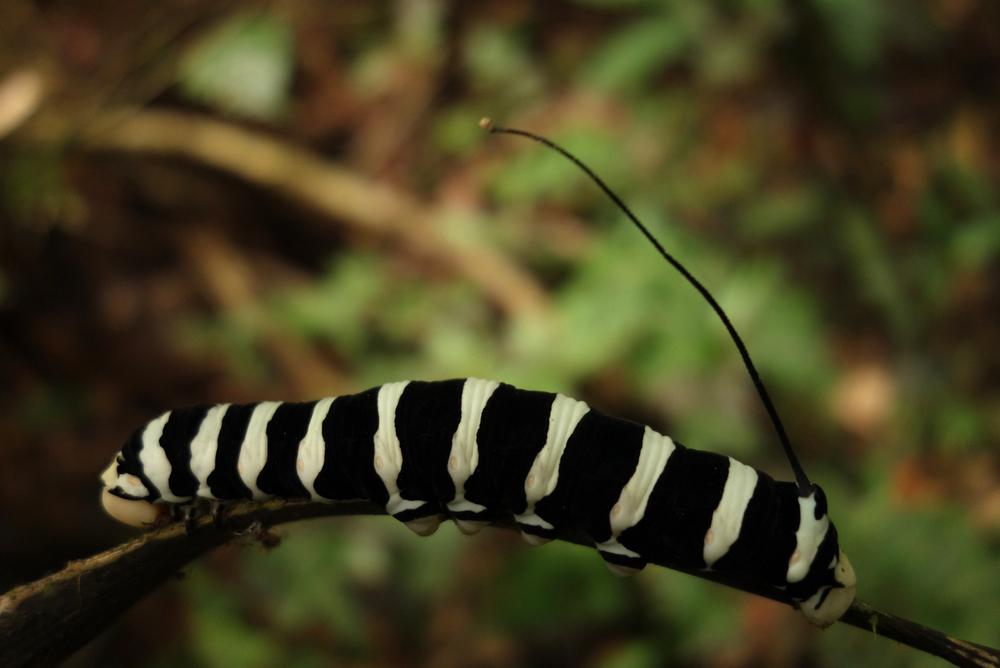 Pacaya-Samiria Reserve