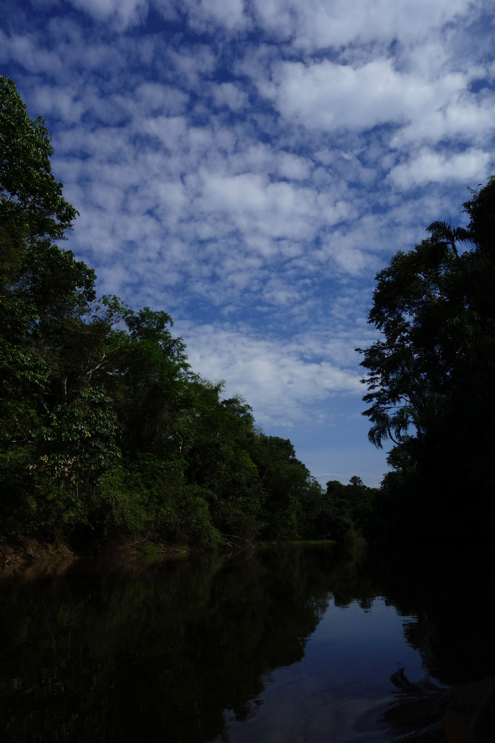 Mid afternoon on the Samiria River