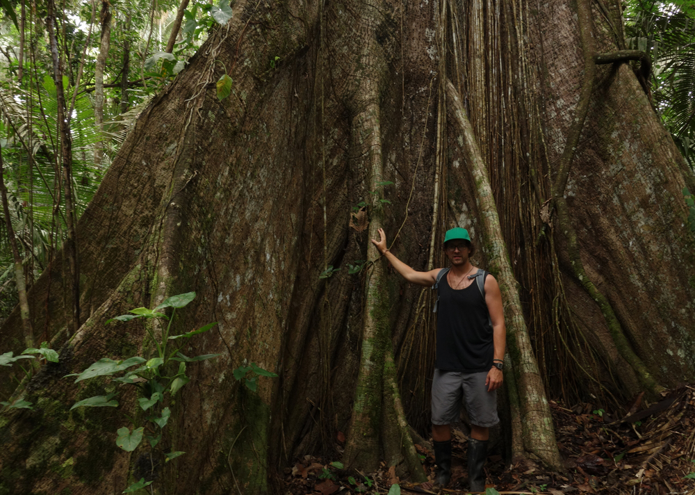 Myself leaning against the buttress root of a forest giant. Pacaya-Samiria Reserve