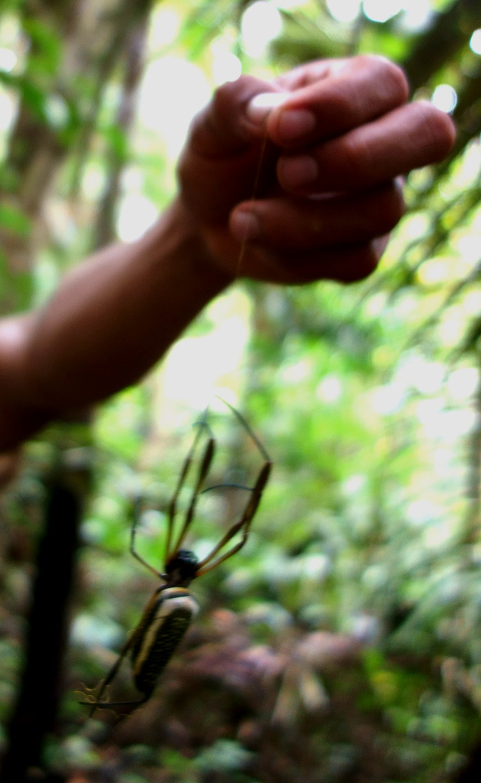 Juan dangling a Tarantula. Pacaya-Samiria Reserve