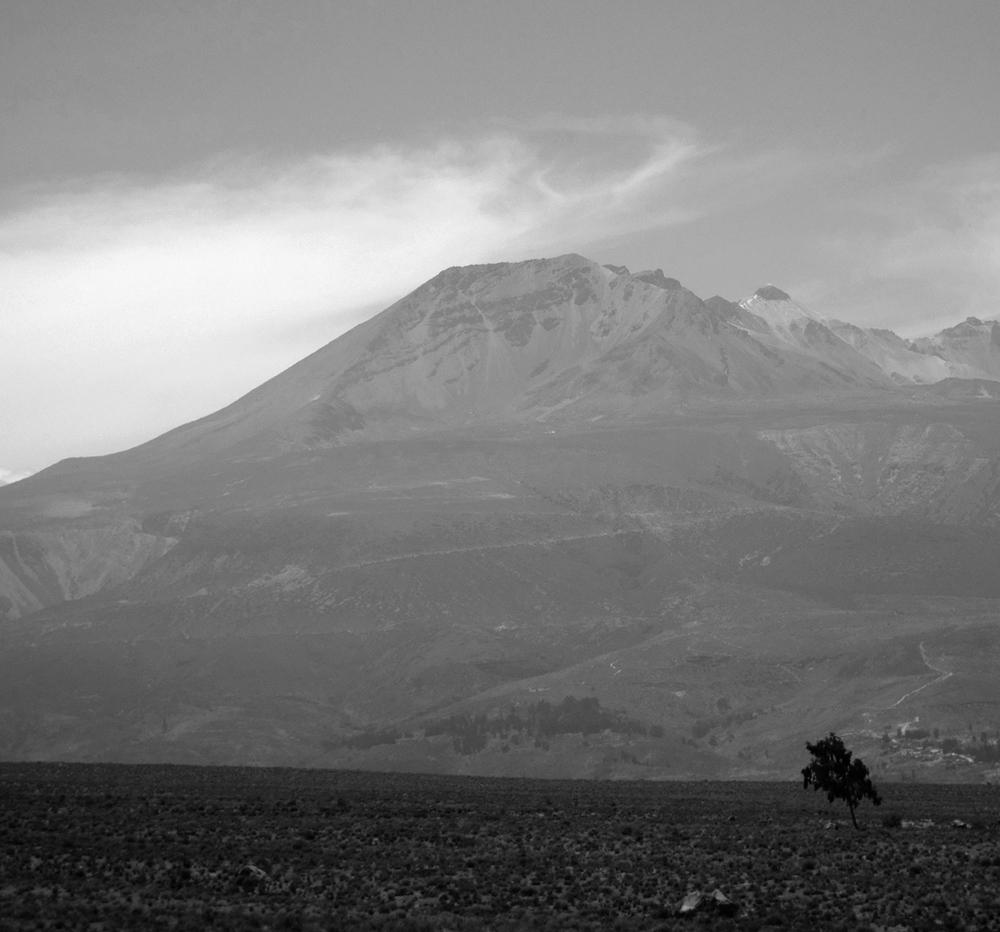 Solitary tree at the base of El Misti, Peru