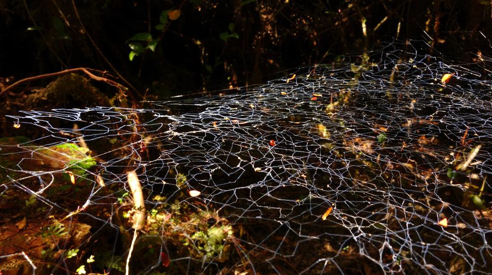 Spider web, Parque Tantauco - Chile