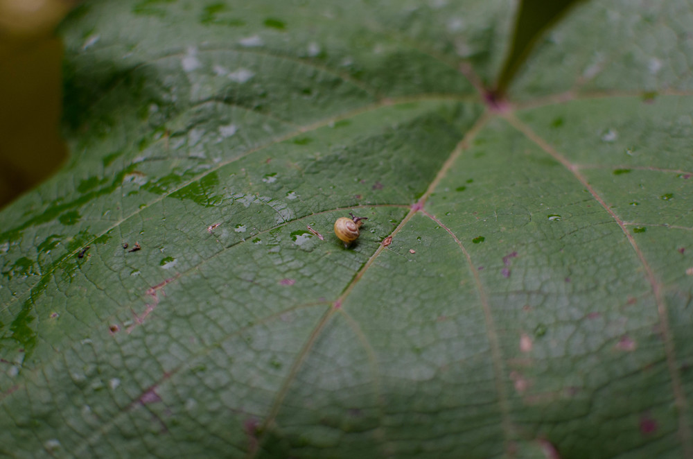 Snail, Giverny