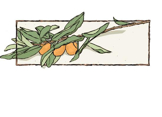 kumquats-lg.jpg