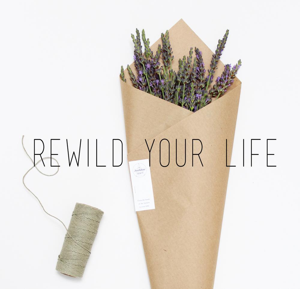 lavendar-1.jpg