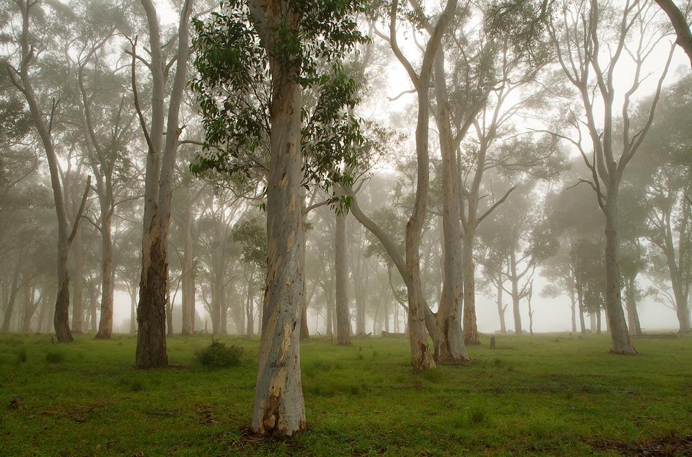 misty forest 0351.jpg