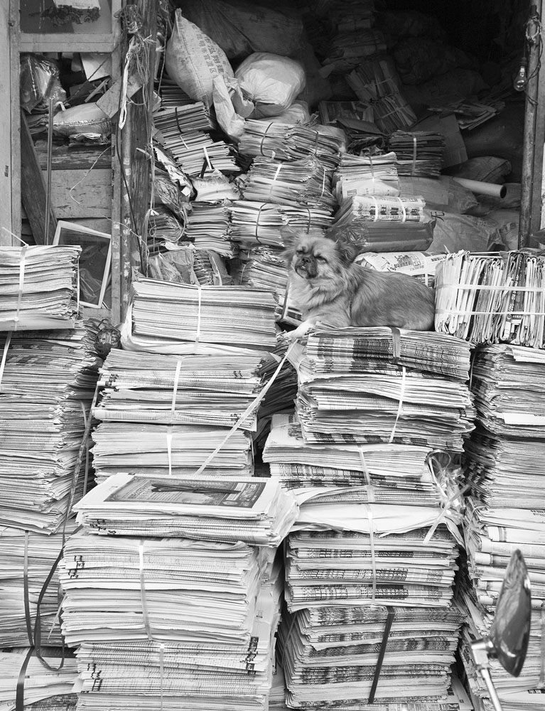 dog on newspapers 4211.jpg