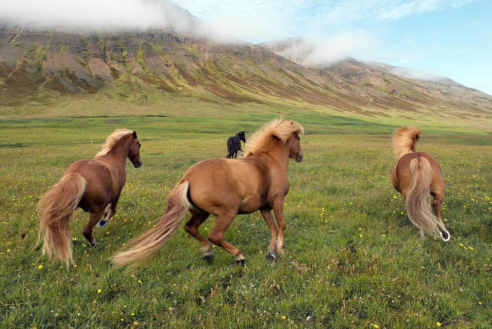 horses running 2946.jpg