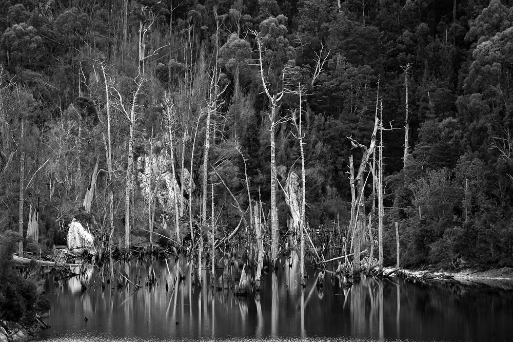 dead trees in lake 9752.jpg