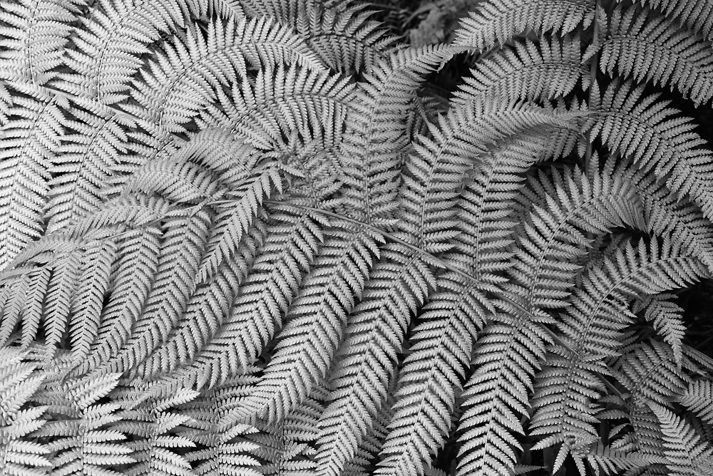 rotating ferns 6019.jpg