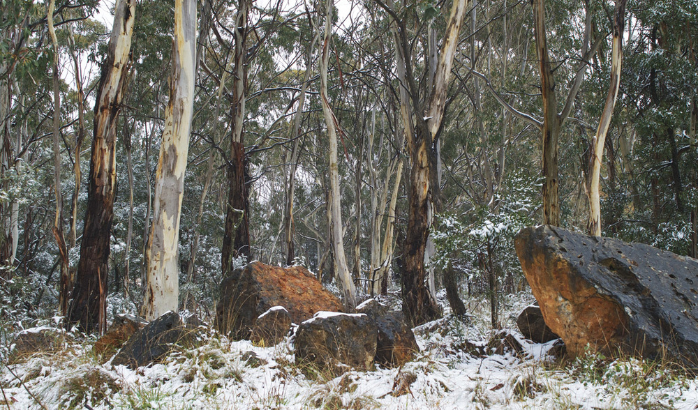 rocks and trees in snow pano 6170.jpg