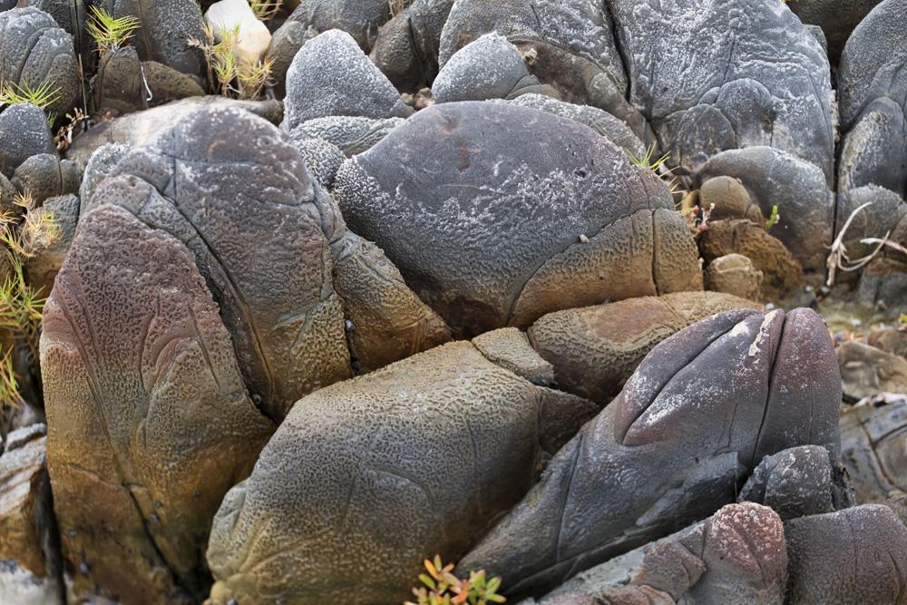 fish rocks 5103.jpg