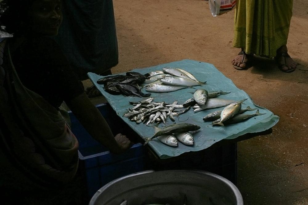 fish sale 2008.jpg
