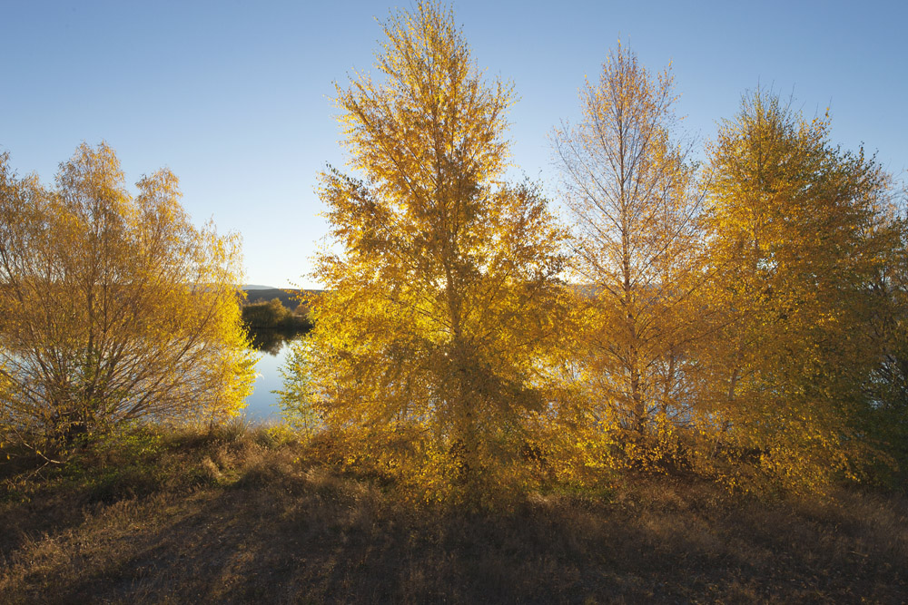 trees on bank 0281.jpg
