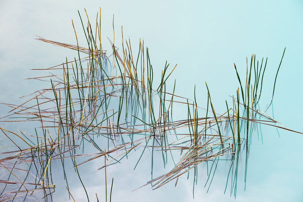 blue lake reeds 0349.jpg