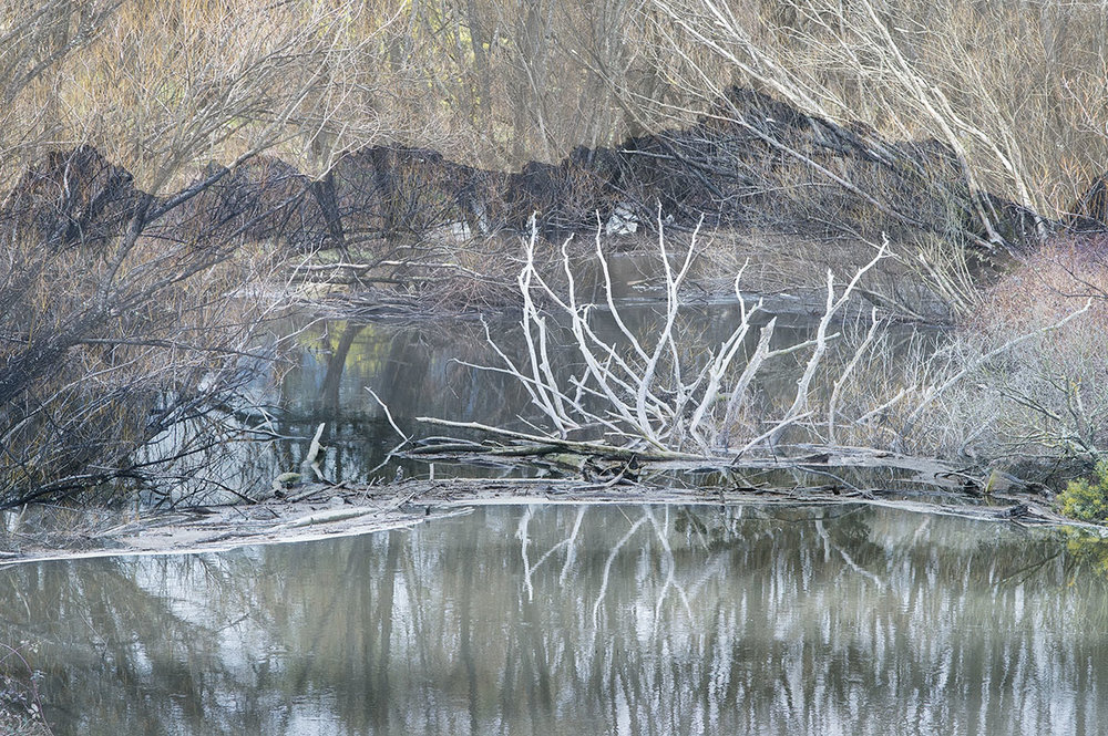 abstract river trees #3.jpg
