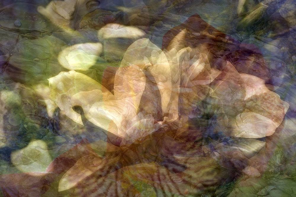 magnolia and cat.jpg