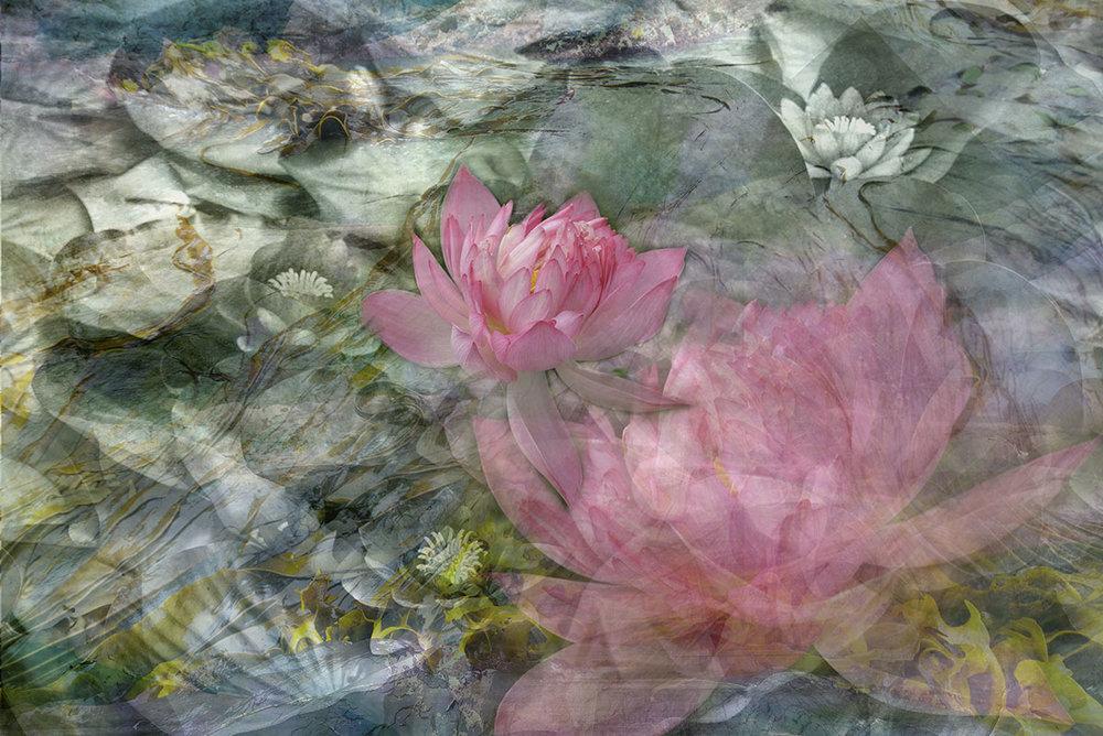 emerging lotus.jpg