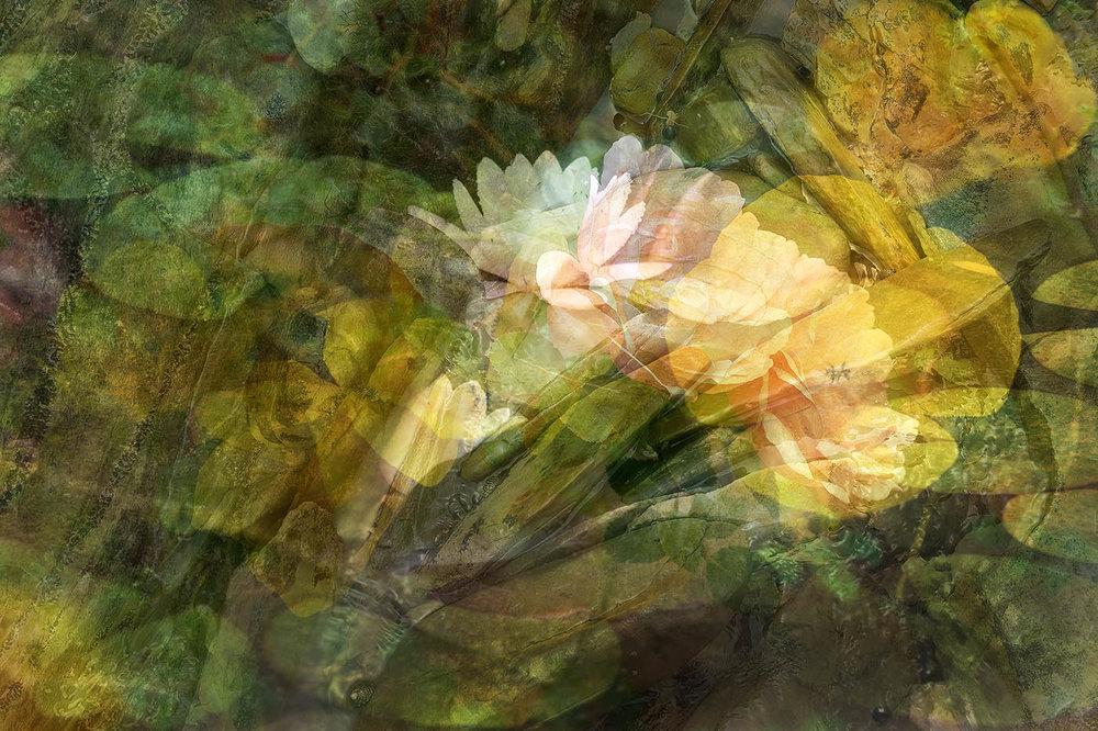 fox and lilies.jpg