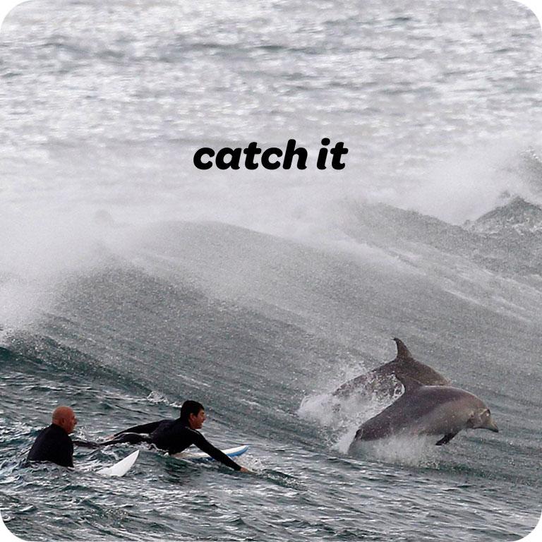 catch-It3.jpg