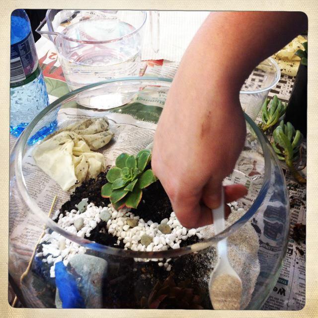 succulent terrarium making.jpg