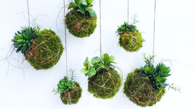 succulent balls.jpg