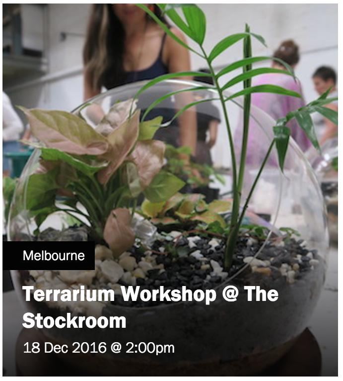 18 dec terrarium.png