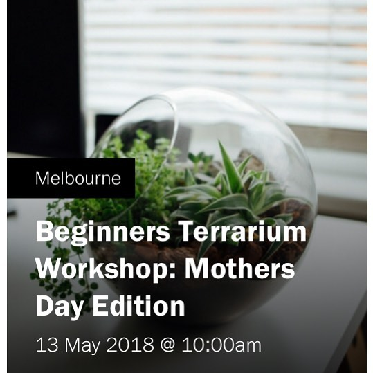 Next workshop 🌿🌱🌵🤱🏼🤰 make a terrarium with your mum for Mother's Day!  #terrarium #terrariumworkshop #mothersday #melbourne #makeit #petitegreen