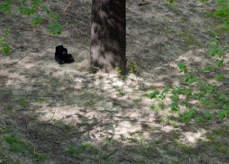 Cipele pod drvetom