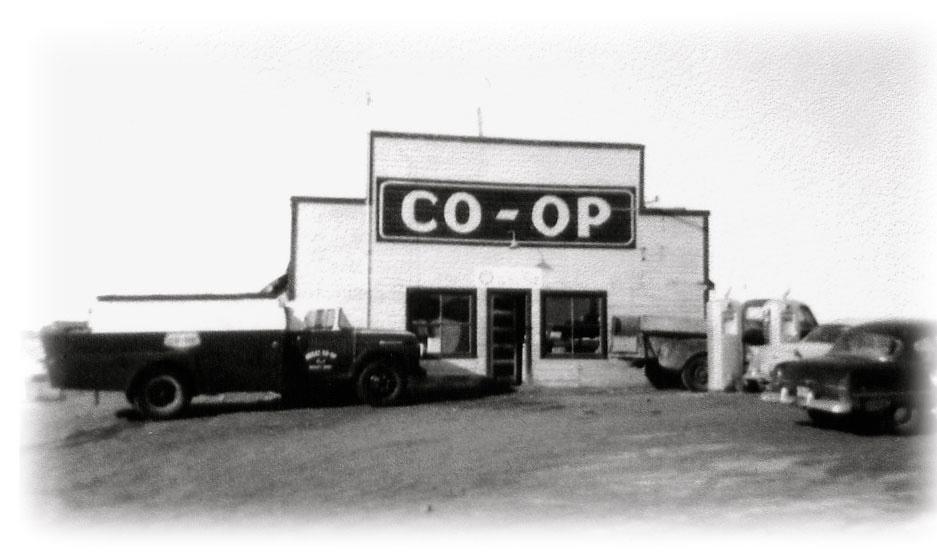 coop1.jpg