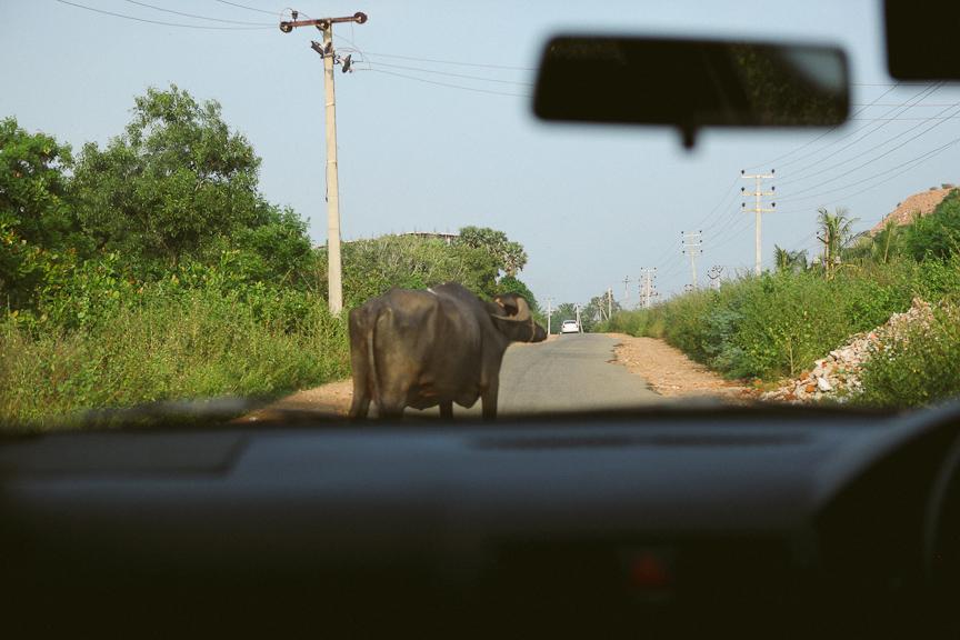 India2012WEB-530.jpg