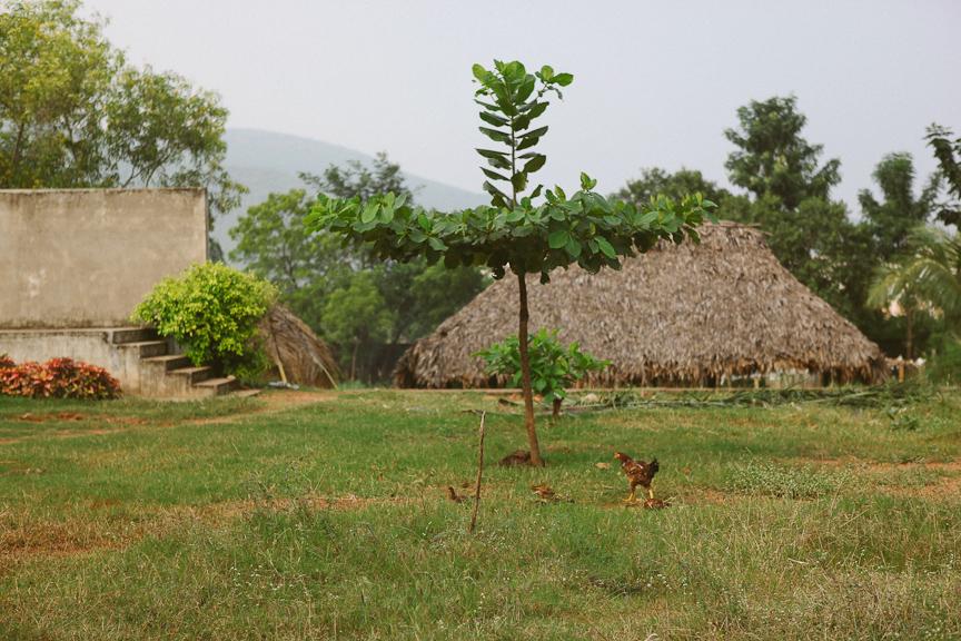 India2012WEB-323.jpg