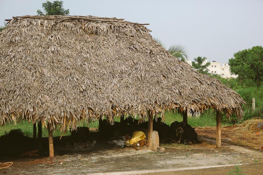India2012WEB-326.jpg