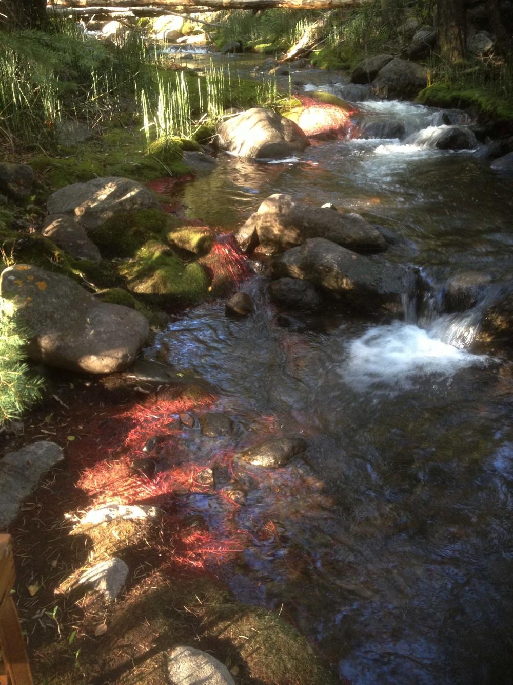 site-9.8.13 n. crestone creek 1.jpg