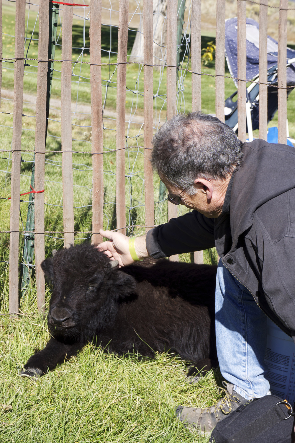 petting a baby yak at  yaktoberfest  yesterday
