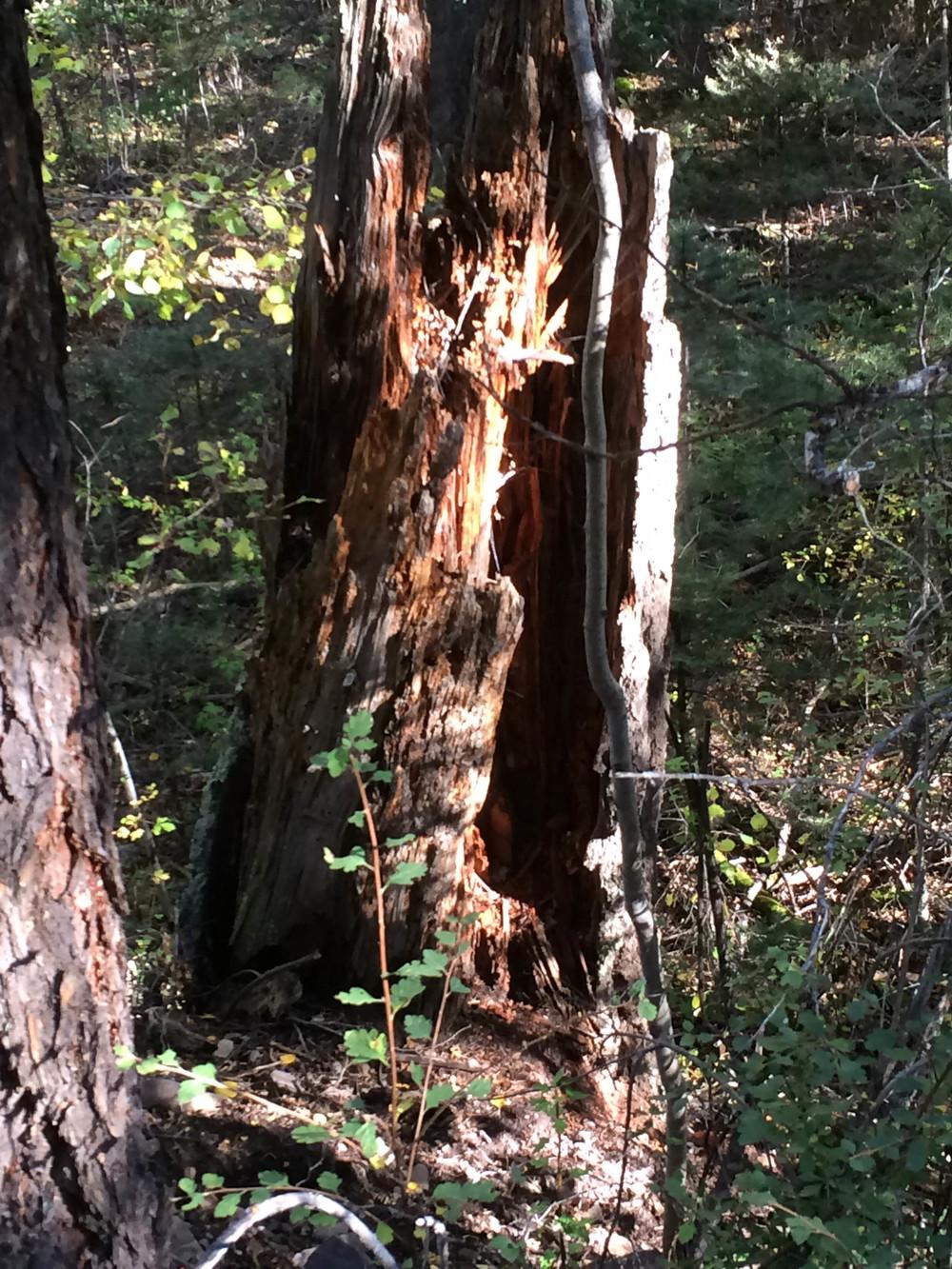 10-2-14 n.crestone trail 1-17-2.jpg